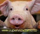 Happy Pigs Puzzles